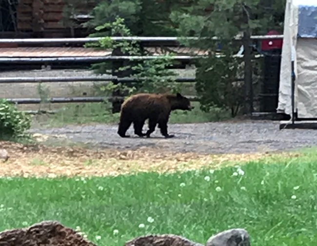 What bullet can kill a bear
