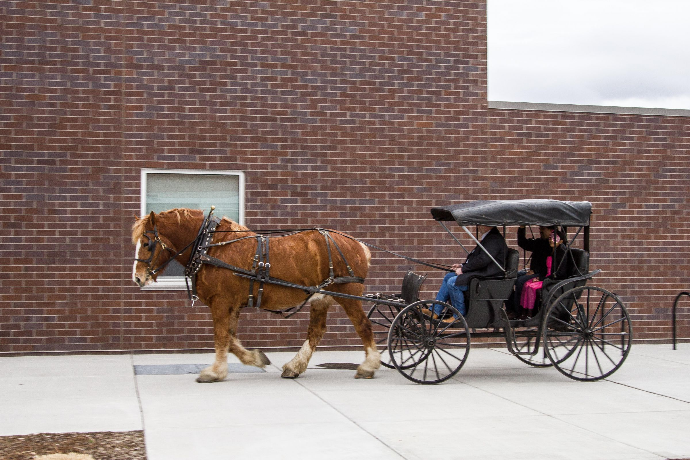Redmond School Superintendent Mike McIntosh driving a carriage.