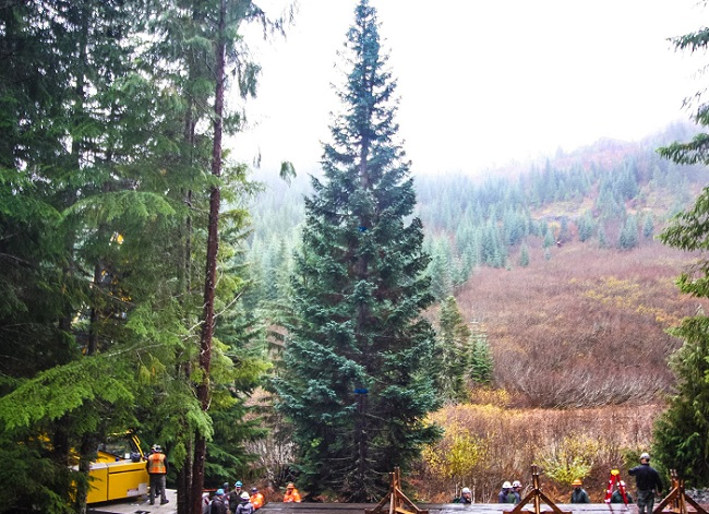 capitol christmas tree stops in bend today